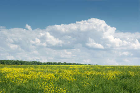 yellow field. A landscape about vegetation and the beautiful sky Stock Photo - 3907100