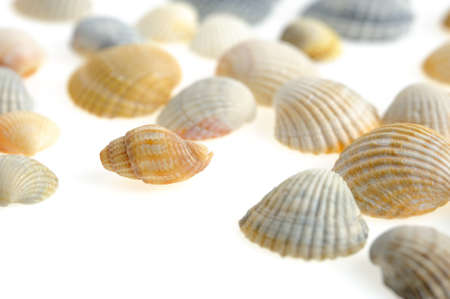 vertebrate: Cockleshells. A kind of protection of a body of vertebrate animals much a demon. Stock Photo