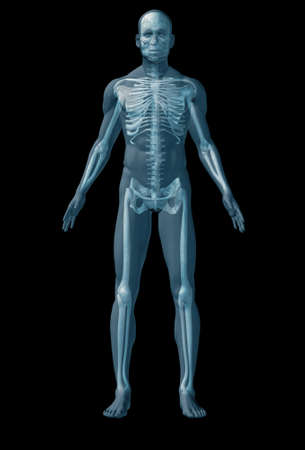 muscular system: Skeleton human. The abstract image of human anatomy through a translucent surface