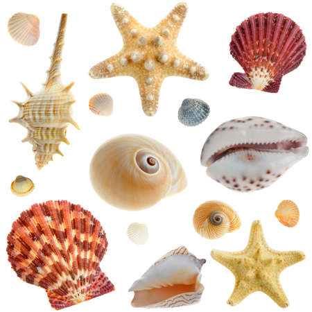 Set of sea cockleshells. It is isolated on a white background photo