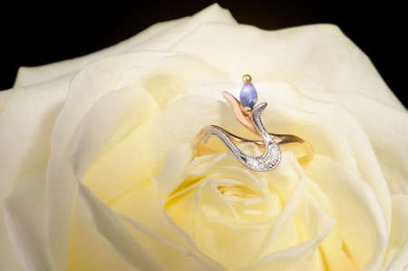 Ring in a white rose. A jewelry on a blossoming bud of a flower Stock Photo - 4290603