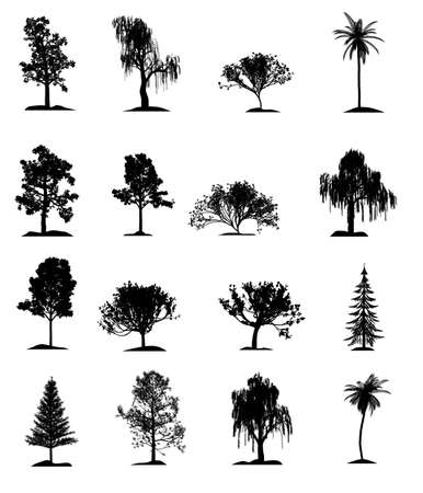 pussy tree: Set of trees. It is isolated on a white background