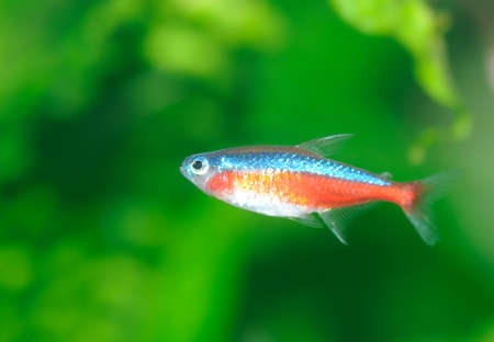 Tropical fish. The colourful underwater world of the warm seas Stock Photo - 4784542