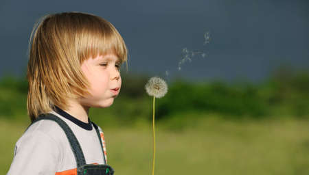 year profile: The boy and a dandelion. The small child blowing on a flower of a dandelion
