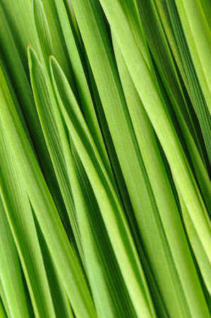 green vegetation: Grass a background. Fresh green vegetation close up