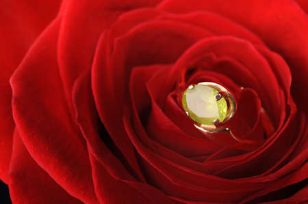 Ring in a red rose. A jewelry on a blossoming bud of a flower photo