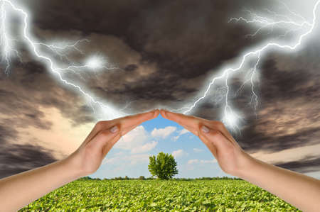 rainstorm: Two hands preserve a green tree against a thunder-storm. Concept of preservation of the nature Stock Photo