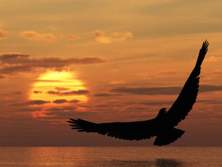 tropical bird: Eagle above ocean. Picturesque sunset. 3D rendering