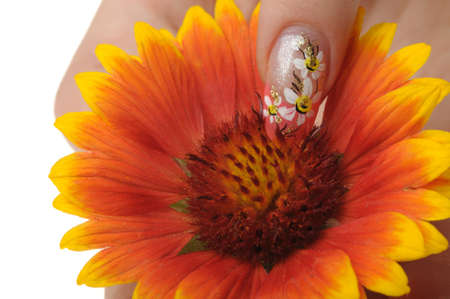 Nail art. Female nails with figure of a camomile close up above a flower Stock Photo - 7455026