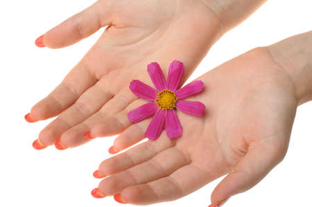 Flower in female hands. It is isolated on a white background Stock Photo - 7455034