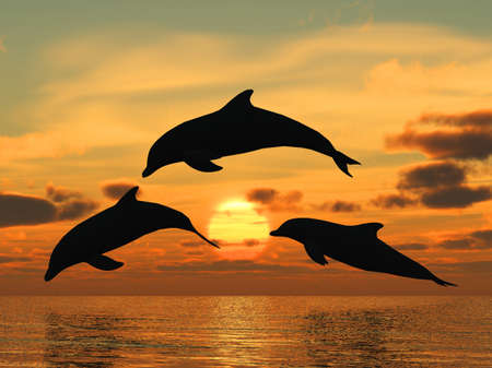 dolphin fish: Three dolphins floating at ocean (control light)