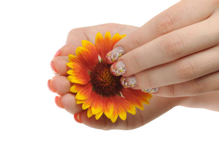 Nail art. Female nails with figure of a camomile close up above a flower Stock Photo - 7949098