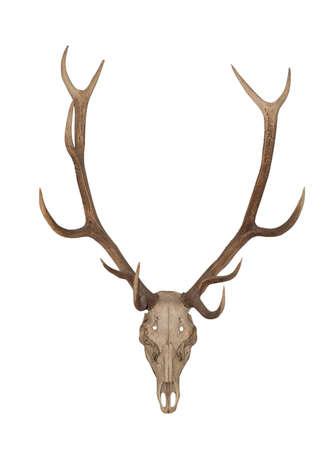 horned: Cuernos de un animal. Cuernos de largly cuernos stock, se encuentra aislada en un fondo blanco Foto de archivo