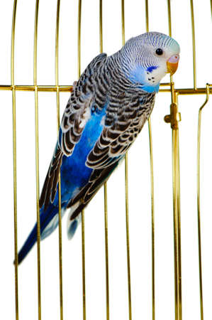 Parrot on a lattice cage. It is isolated on a white background. Stock Photo - 8587720