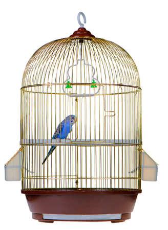 loros verdes: Parrot en jaula. Se encuentra aislada en un fondo blanco.