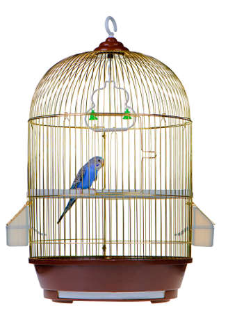 Parrot in cage. It is isolated on a white background. photo