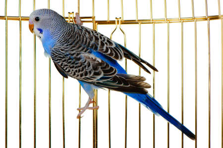 Parrot on a lattice cage. It is isolated on a white background. Stock Photo - 9105015