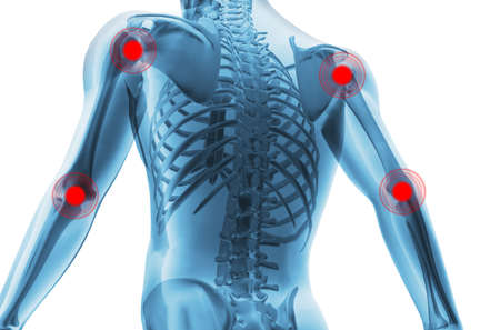 ache: Skeleton of the man with the centres of pains of joints. 3D the image of a mans skeleton under a transparent skin