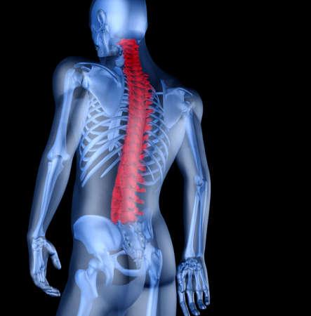 osteoporosis: Esqueleto del hombre con el dolor de espalda. 3D la imagen del esqueleto de un hombre bajo un aspecto transparente Foto de archivo