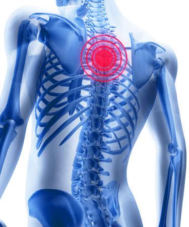 wirbels�ule: Skelett des Mannes mit den Zentren wie ein Schmerz von einem Backbone. 3D das Bild eines Mannes Skeletts unter eine transparente Haut Lizenzfreie Bilder