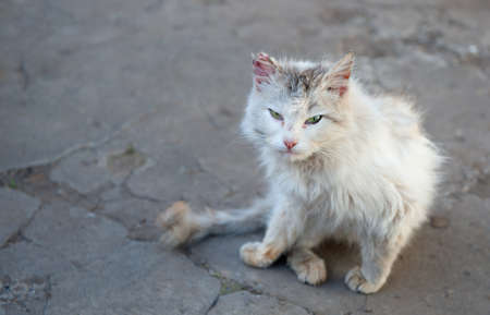 Vagrant cat. Dirty an animal in the street Stock fotó