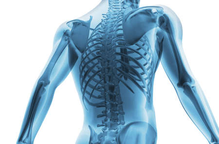 columna vertebral humana: Esqueleto del hombre. 3D la imagen del esqueleto de un hombre bajo un aspecto transparente Foto de archivo