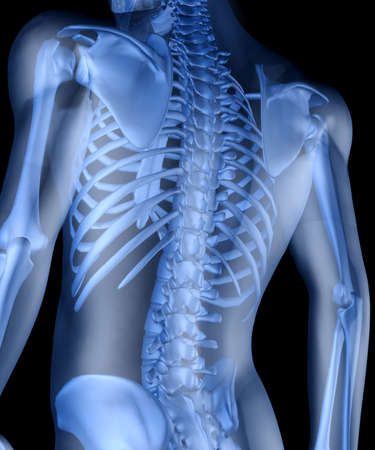 squelette: Squelette de l'homme. 3D l'image du squelette d'un homme sous une peau transparente