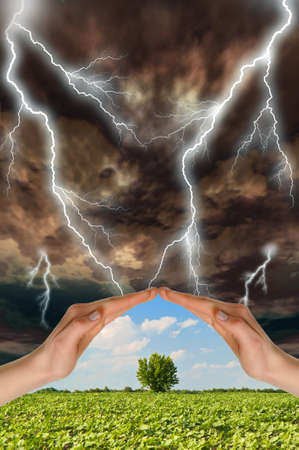 preservation: Two hands preserve a green tree against a thunder-storm. Concept of preservation of the nature Stock Photo
