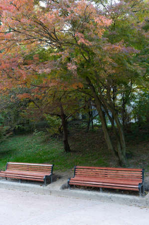 Autumn park. Rainy weather. The Lvov park photo