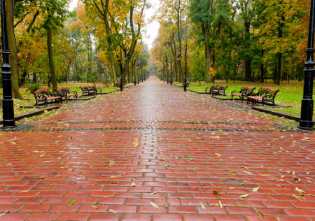 paved: alleyway with paved road to autumn park. The Lvov park Stock Photo