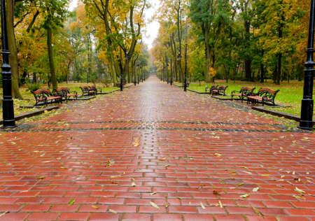 empedrado: callejón con carretera asfaltada al Parque de otoño. El Parque de Lvov Foto de archivo