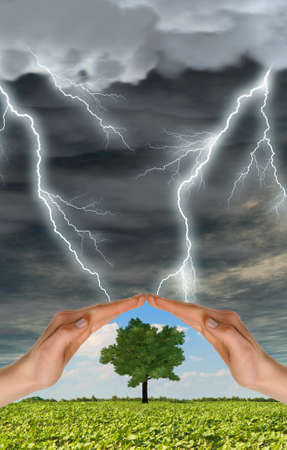 2 persons: Two hands preserve a green tree against a thunder-storm. Concept of preservation of the nature Stock Photo