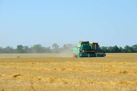 Harvesting. The combine reaps a crop of wheat in filed Stock Photo - 10424951