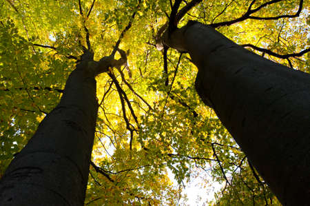 vysoký úhel pohledu: Větší podzimní stromy. Spodní pohled. Lvov parku Reklamní fotografie