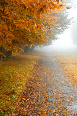 alleyway in foggy park. Autumn, rainy weather photo