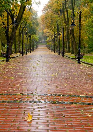 empedrado: callejón con carretera pavimentada hasta el otoño de parque. El parque Lvov Foto de archivo