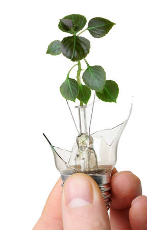 The broken bulb in a hand with a plant growing from it. It is isolated on a white background Stock Photo - 11347333