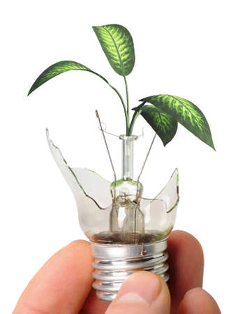 The broken bulb in a hand with a plant growing from it. It is isolated on a white background Stock Photo