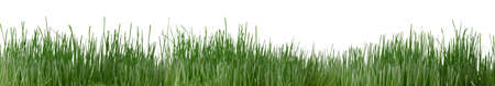 Grass isolated. High detailed photo green grass. photo