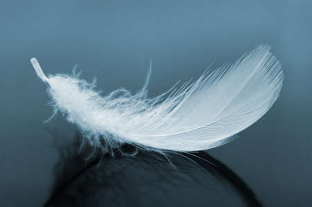 frailty: Feather. The birds feather blue tone images Stock Photo