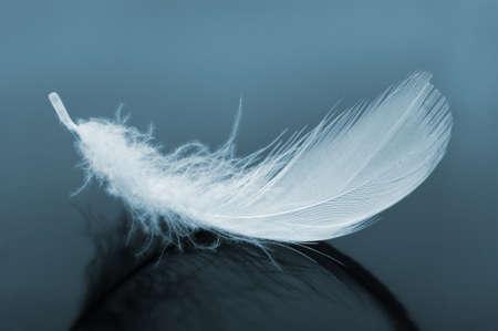 pluma blanca: Pluma. El pájaro de las imágenes de plumas azules de tono Foto de archivo