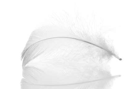 reflexion: Pluma. La pluma de ave se encuentra en un fondo blanco con la reflexi�n