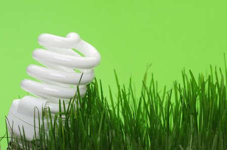 Energy saving compact fluorescent lightbulb in a green grass photo