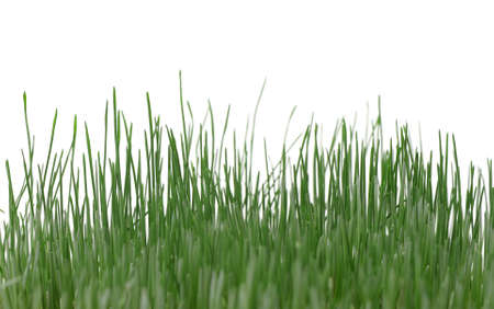 blade: Grass isolated. High detailed photo green grass.