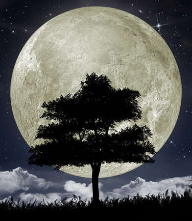 Silhouette of a tree against the big moon and the star night sky. Stock Photo - 12701053