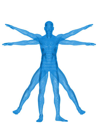 digitally generated image: Vitruvian man. 3d rendering. On white