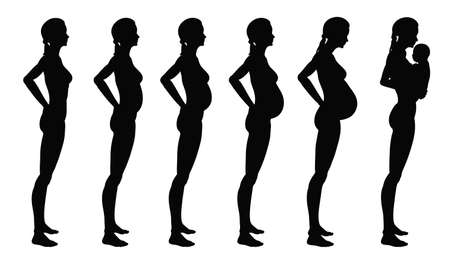 Stages of pregnancy of the woman. A profile full growth it is isolated on a white background