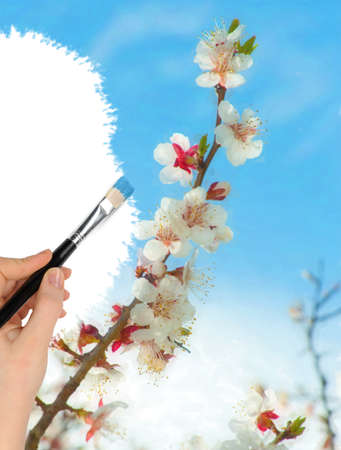 saturate: The hand with a brush draws a landscape.The blue sky and blossoming spring branch