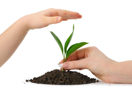 Hand putting a plant in heap earth and a childrens hand covering. Isolated on white background photo