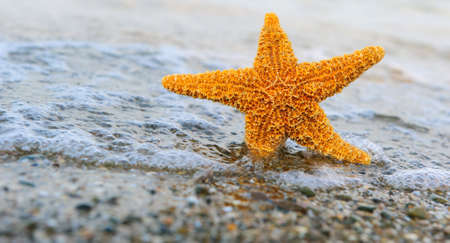 ashore: Starfish ashore. Waves on a background